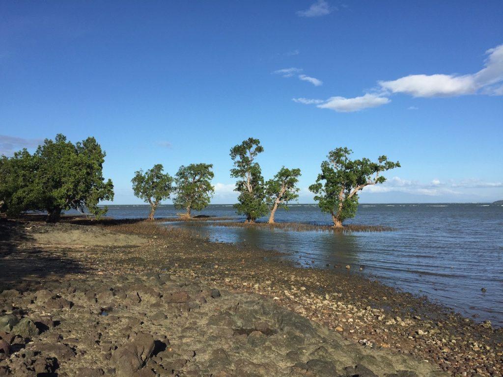 guimaras-mangrove